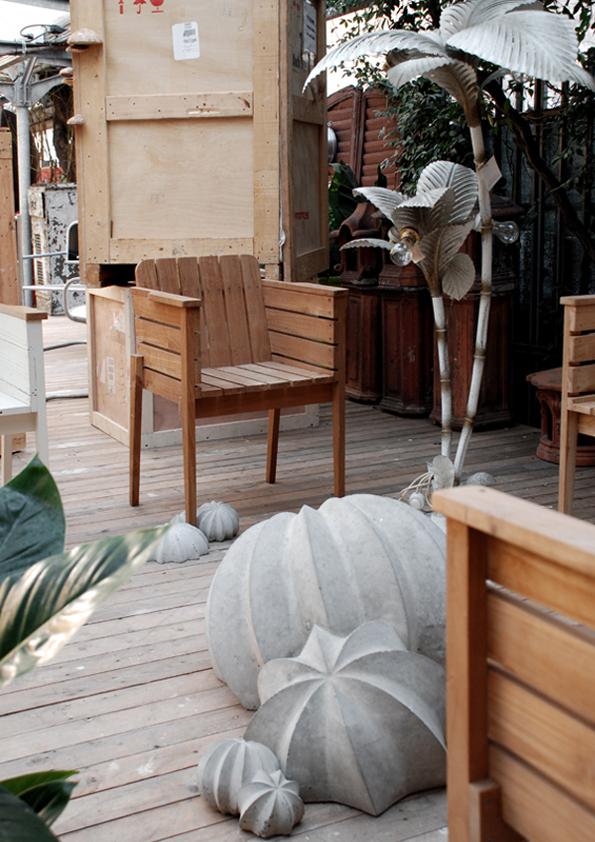 #Aylin Langreuter #Kaktus #Rossana Orlandi 01